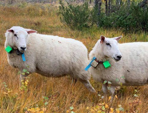 Findmy flytter Mini Landbruksmessa til november